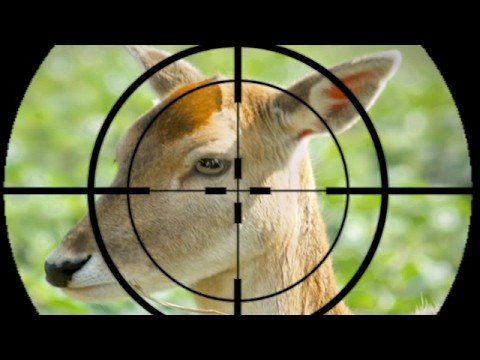 Killing Bambi: Why we nearly provisionally liquidated high profile CPA Australia